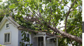 What Should You Do When You Need Emergency Roof Repair in Ann Arbor MI?