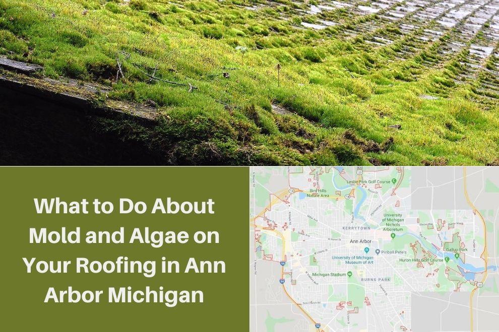 Roof Algae Ann Arbor MI