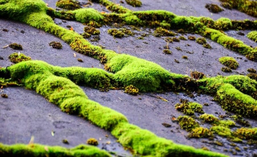 What to Do About Mold and Algae on Your Roofing in Ann Arbor Michigan